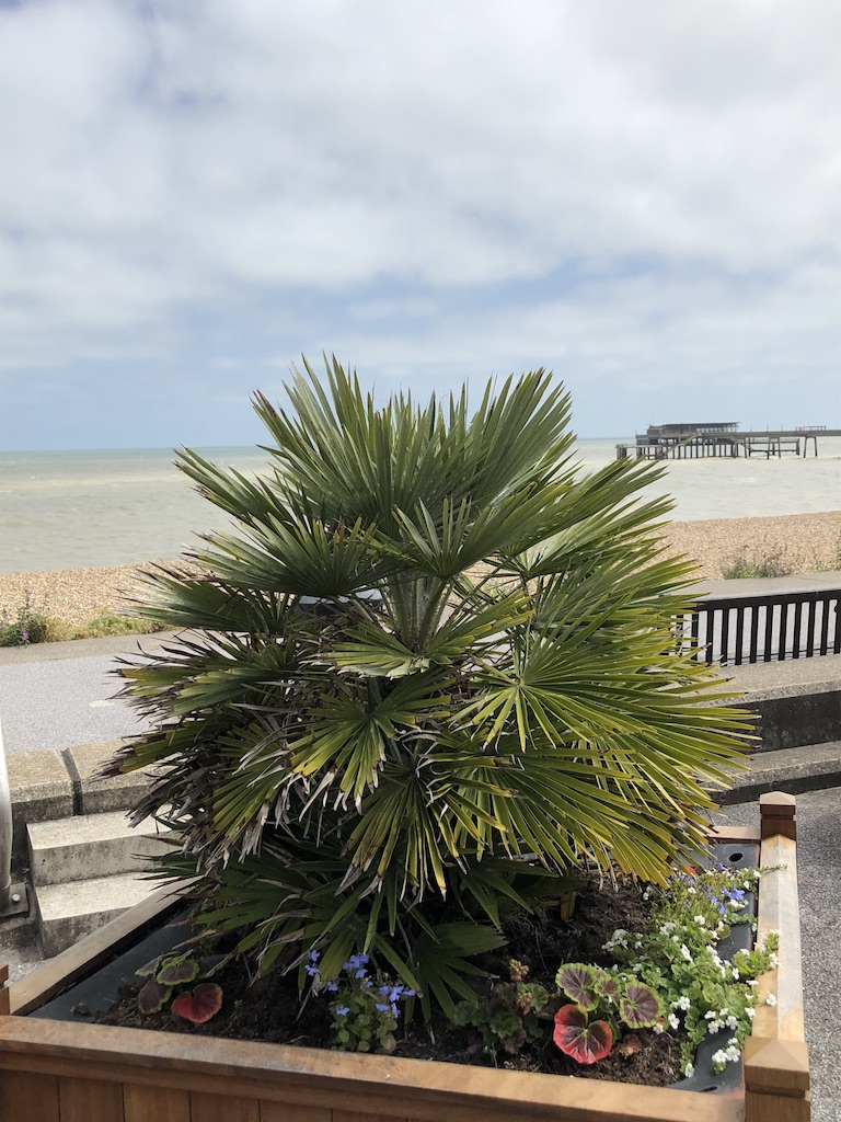 Tropical Beach Plant Pier View Pebble Beach Sea Swimming Concrete Pier Fishing Cafe on Pier Dog Friendly holiday cottage deal kent holiday cottage kent coast holiday cottages kent and sussex holiday cottage kent dog friendly holiday rentals deal kent holiday cottage kent coast dog friendly holiday cottages kent pet friendly holiday cottages deal kent uk holiday rentals deal kent uk holiday cottage rental deal kent holiday cottage kent swimming pool dog friendly holiday cottages deal kent holiday cottage in deal kent holiday cottage kent dover holiday cottage kent for sale holiday cottage kent hot tub holiday cottage kent pets welcome holiday cottage kent sea view holiday cottage kent sussex holiday cottage kent uk holiday cottage kent with hot tub holiday cottage kingsdown deal kent holiday cottage near deal kent holiday cottages kent coast uk holiday cottages kent dogs welcome holiday cottages kent downs holiday cottages kent tripadvisor luxury holiday cottages deal kent fish and chips food takeaway restaurant flowers hanging baskets conservations area wooden windows sash windows history smugglers pirates fresh fish freshly caught